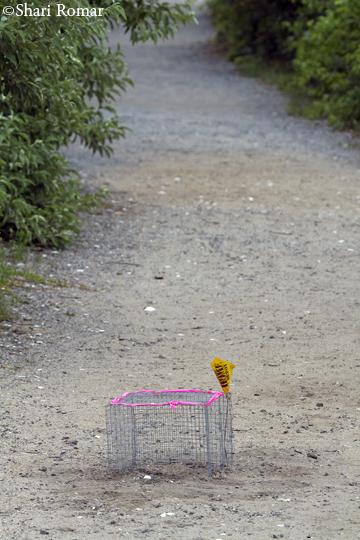 Diamondback Terrapin nest cage