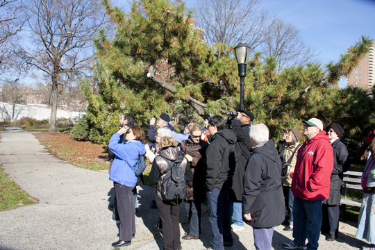 Bird walk at Queens Botanical Garden