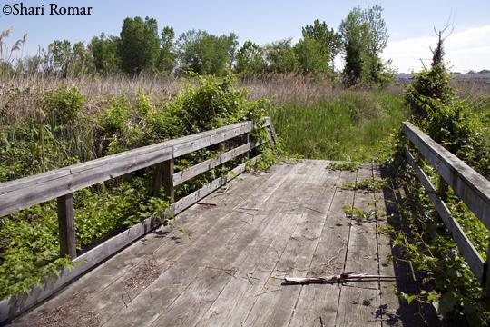 Footbridge at Willow Lake, Flushing Meadows-Corona Park