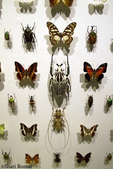 Insectarium, Montreal