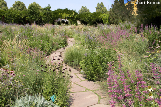 Fragrance Walk - Red Butte Botanical Garden, Utah