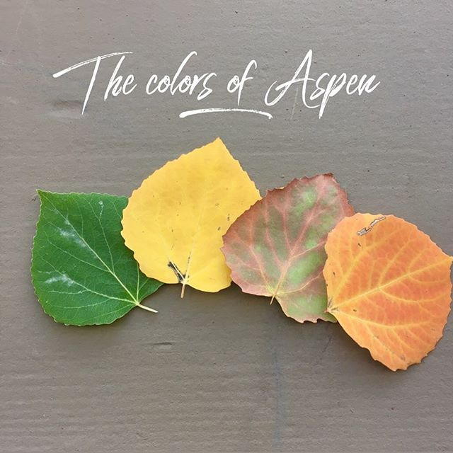 Just one more reason we LOVE Colorado & producing events in the Mountains. The changing of the Aspen's is truly a magical thing to see. Being in the mountains every weekend this last month with events  we were with gratitude runneth over to see the full cycle of the changing. 💕
