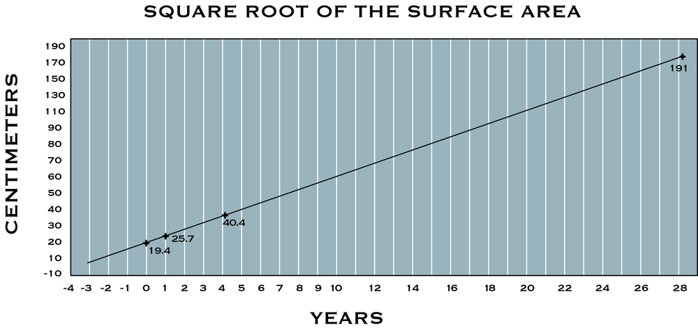 A plot of the square root of the surface area of the phallus sponge generated a straight line.   This line intersected the square root of the surface area of the harvested sponge at year 28.   Assuming the phallus sponge was 3 years old when first measured, and growth rates weremaintained, then the harvested sponge is estimated to be about 30 years old.