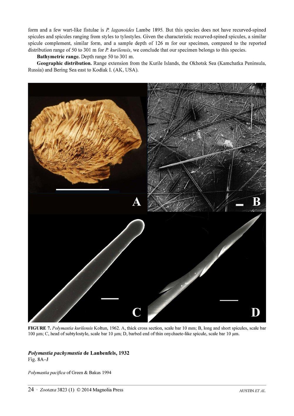 Austin et al 2014 NE Pacific Hadromerids_Page_24.jpg