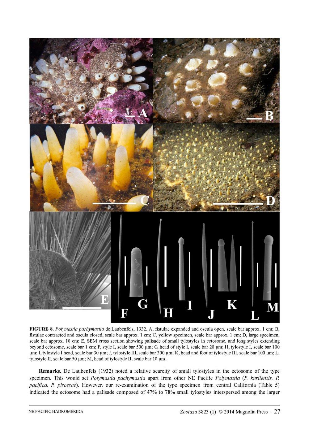 Austin et al 2014 NE Pacific Hadromerids_Page_27.jpg