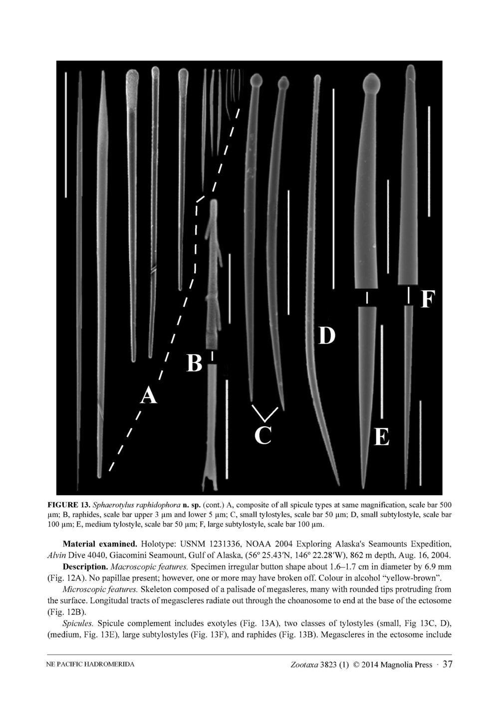 Austin et al 2014 NE Pacific Hadromerids_Page_37.jpg