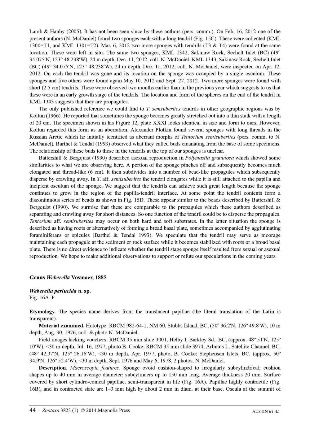 Austin et al 2014 NE Pacific Hadromerids_Page_44.jpg