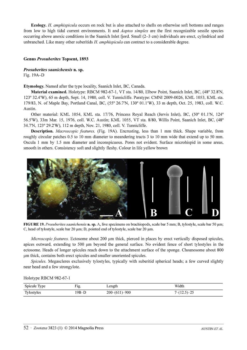 Austin et al 2014 NE Pacific Hadromerids_Page_52.jpg