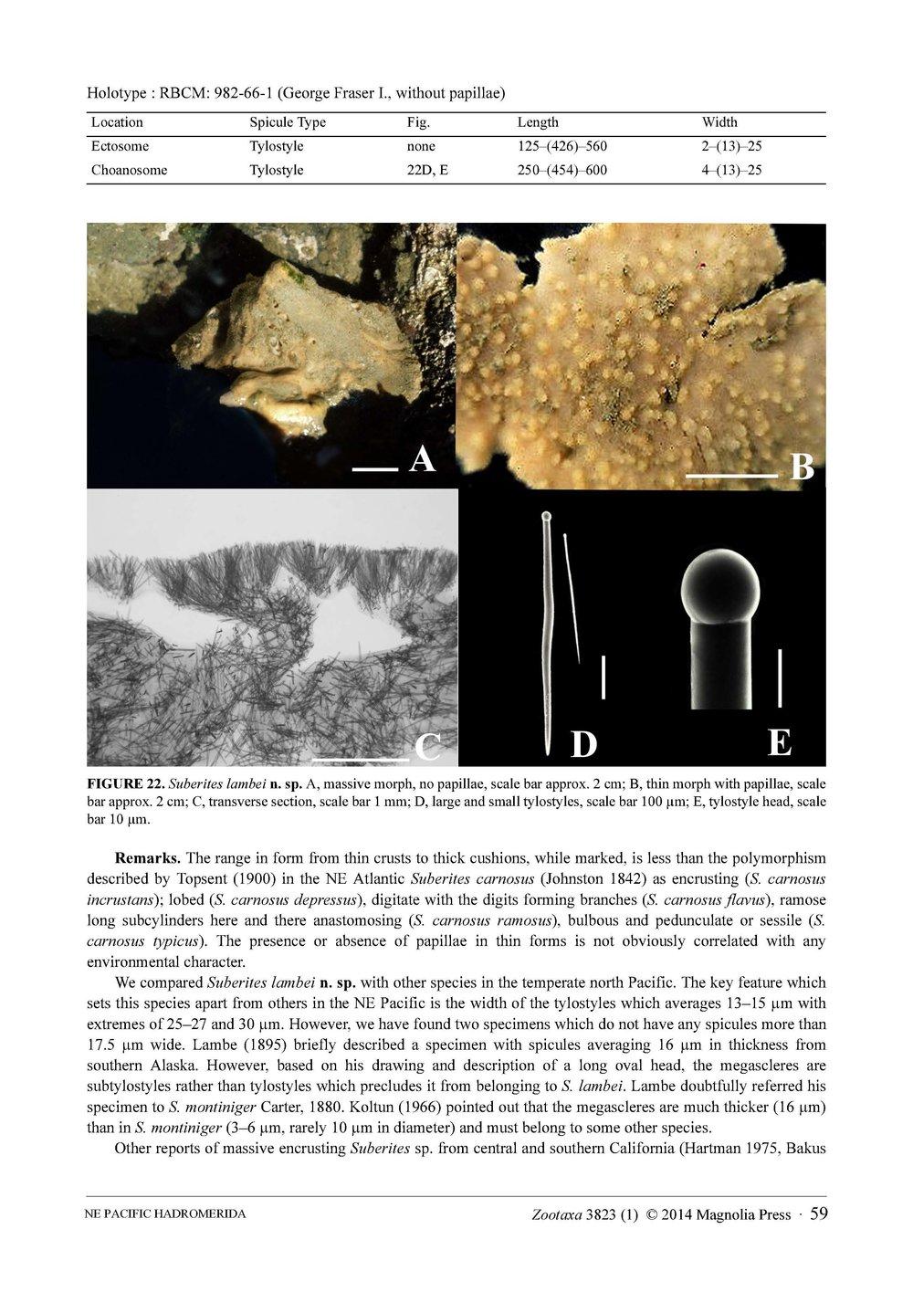 Austin et al 2014 NE Pacific Hadromerids_Page_59.jpg