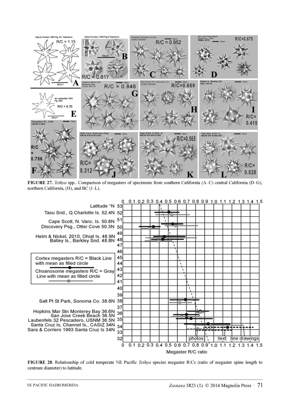 Austin et al 2014 NE Pacific Hadromerids_Page_71.jpg