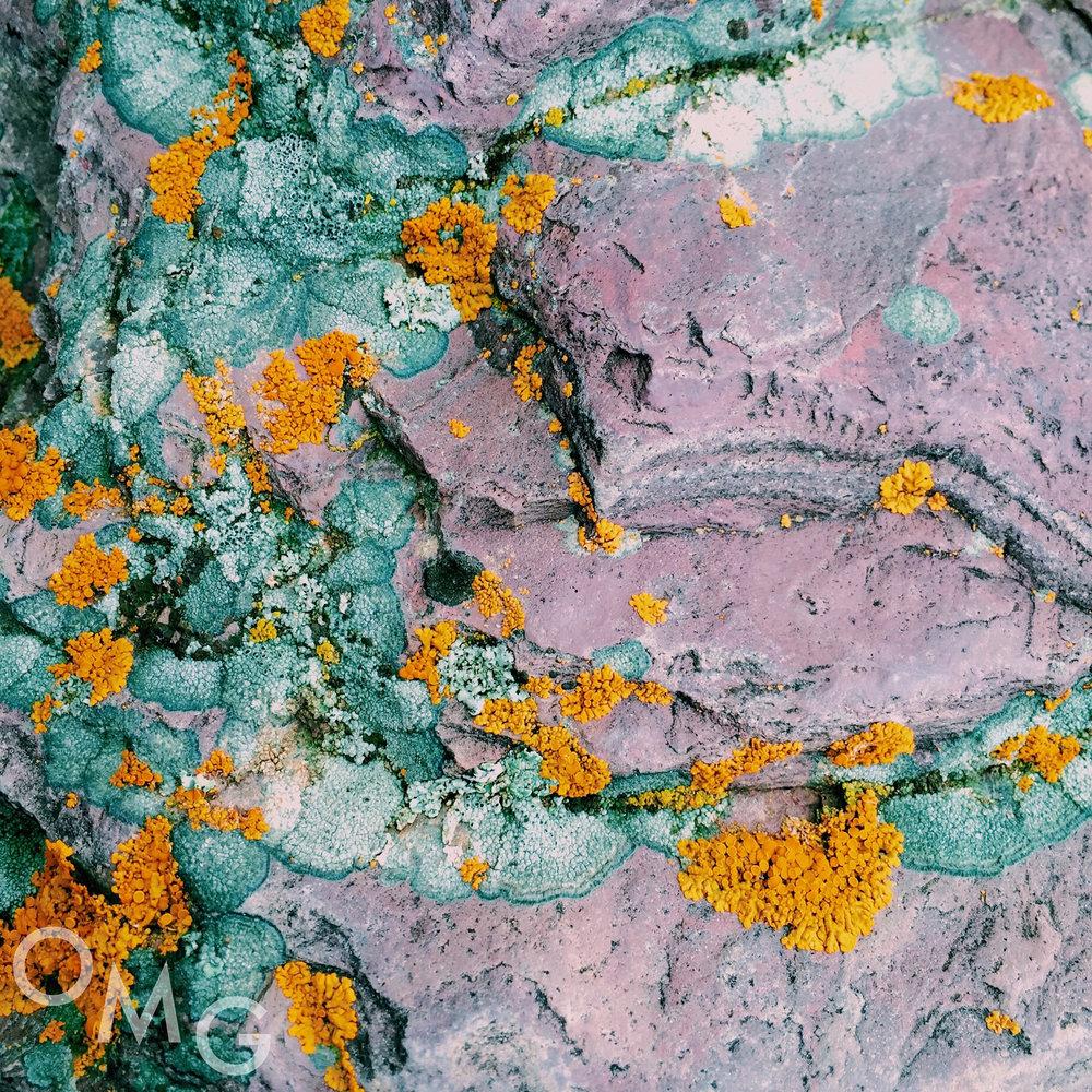 Mossy Lichen copy.jpg