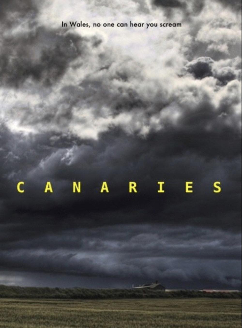 Canaries 21.jpg