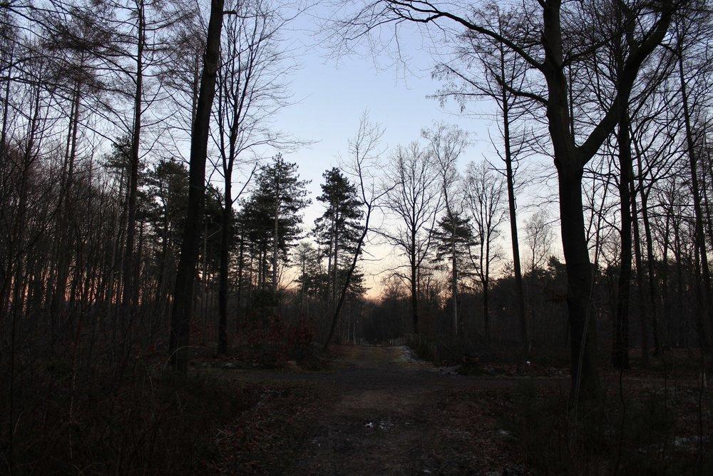 Glencorse Woods