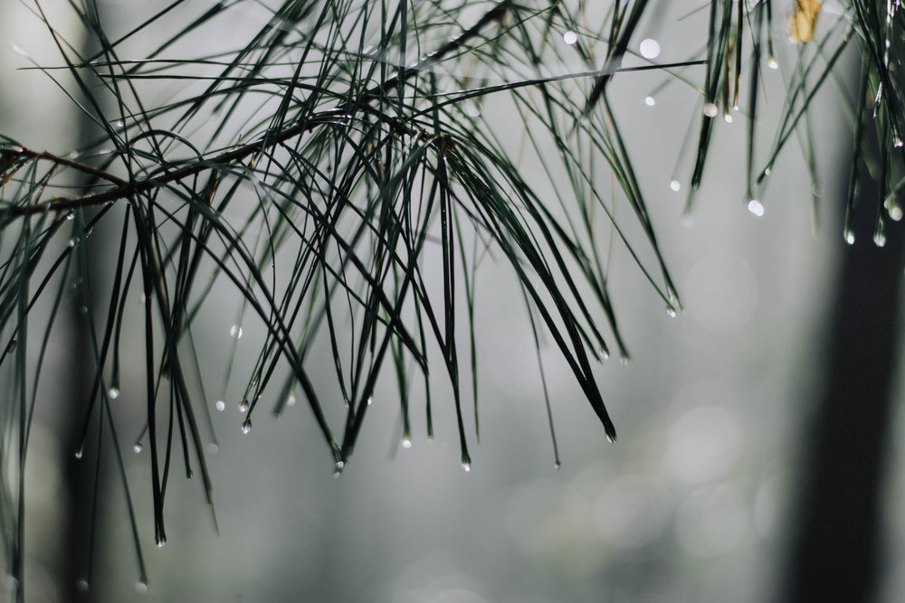 after the rain.jpg
