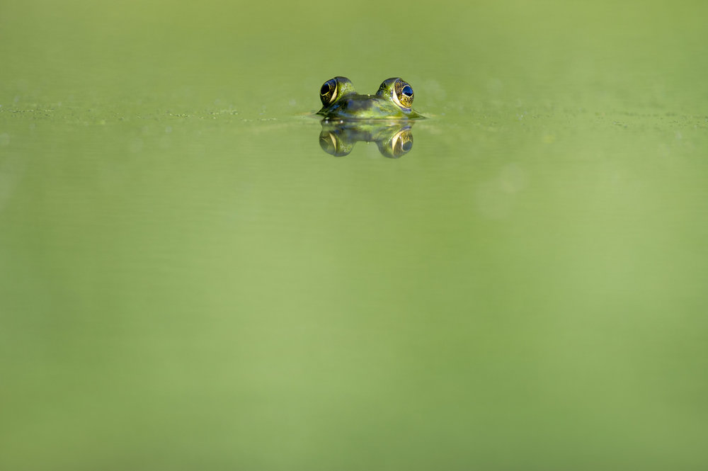 Eat the Frog: A Mantra for College Application Season