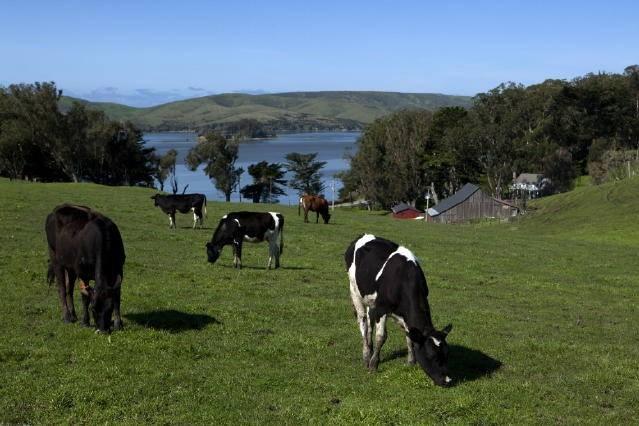 straus home ranch 6.jpg