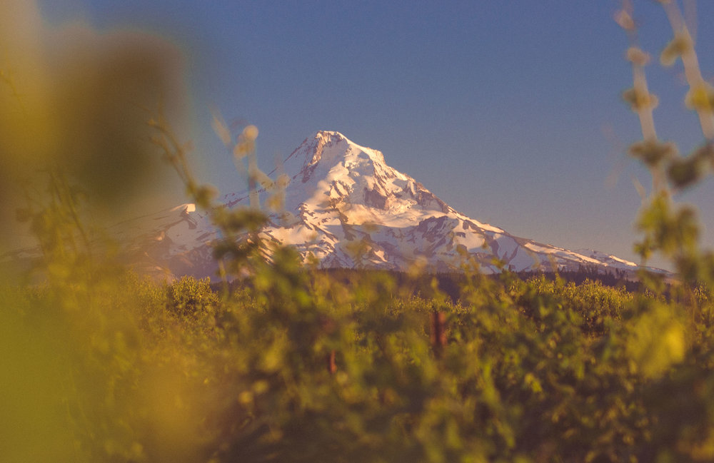 Hood River Wine Alliance Columbia Gorge Wine Mt.Hood Vinyards things to do vacation beautiful scenic fruit loop wine_.jpg