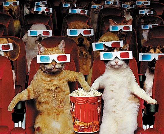 Pets-At-The-Movies.jpg