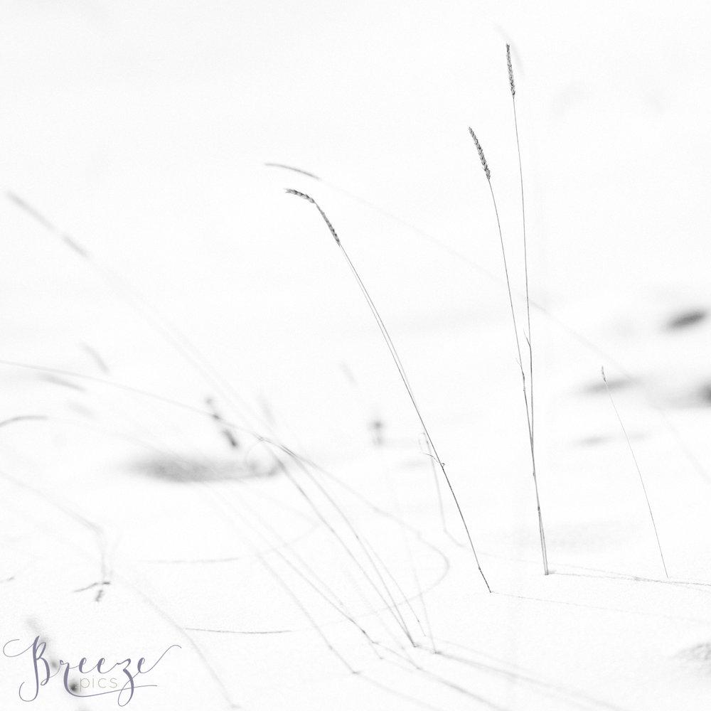 Alpine_wheat_Arosa.jpg