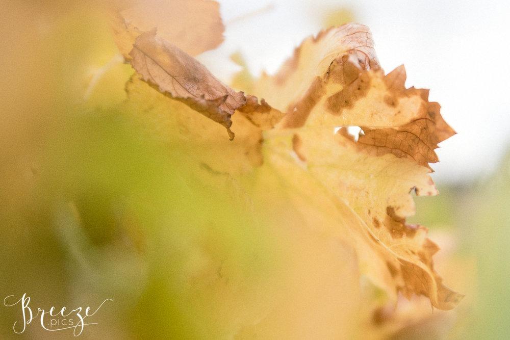 Grape_Leaf_Detail.jpg