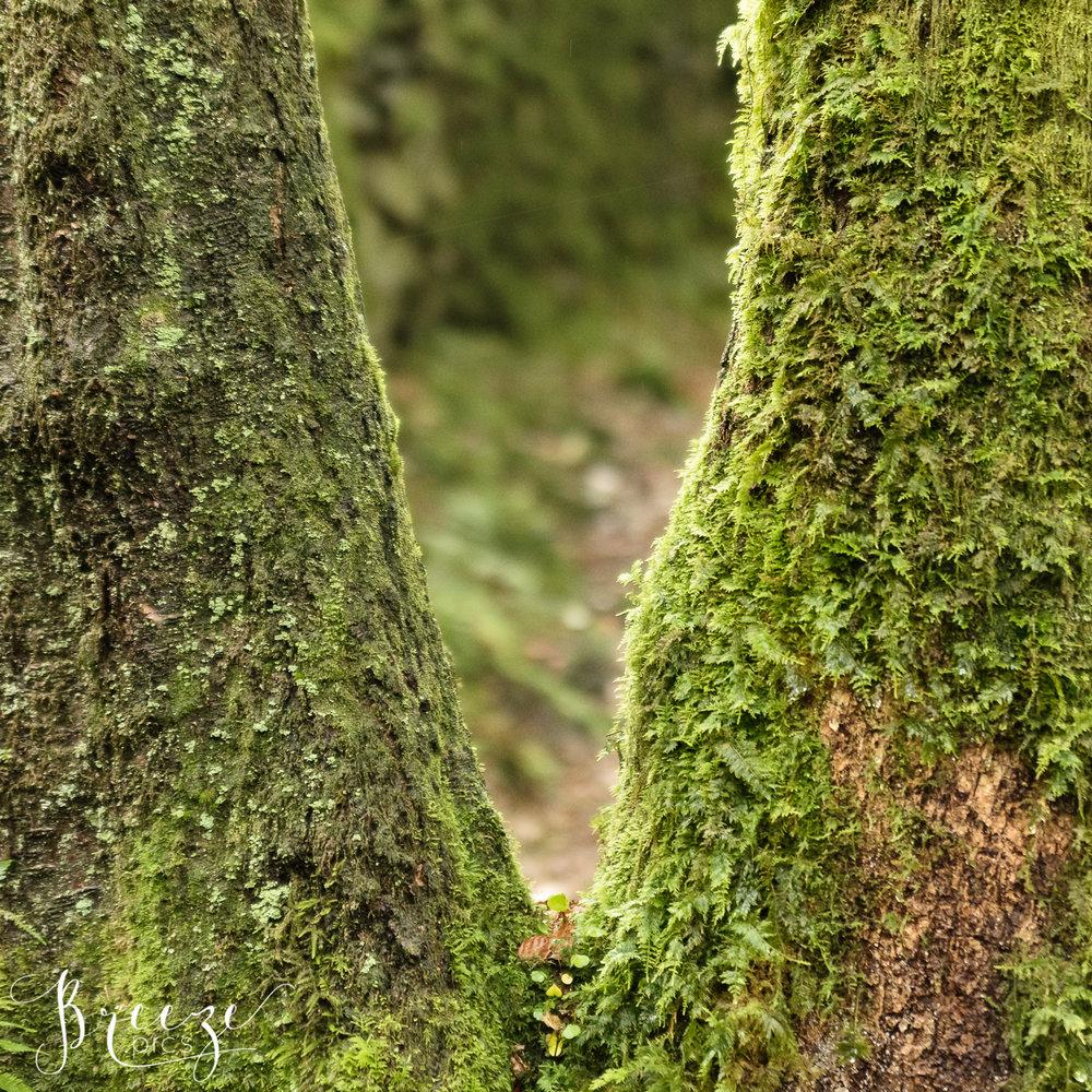Mossy_tree_fork.jpg