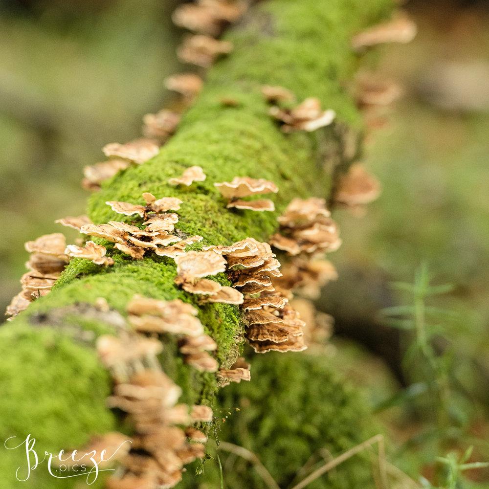 Lichen_moss_covered_trunk.jpg