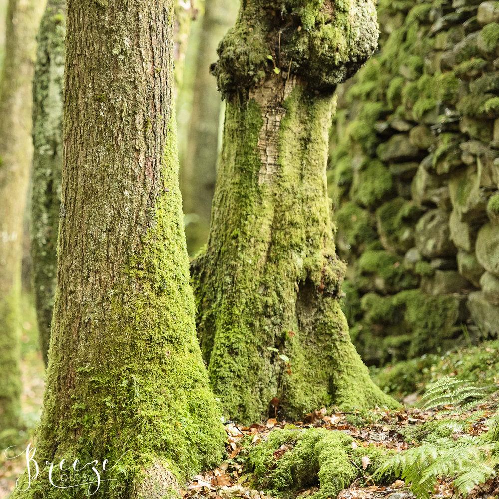 Mossy Tree Trunks.jpg