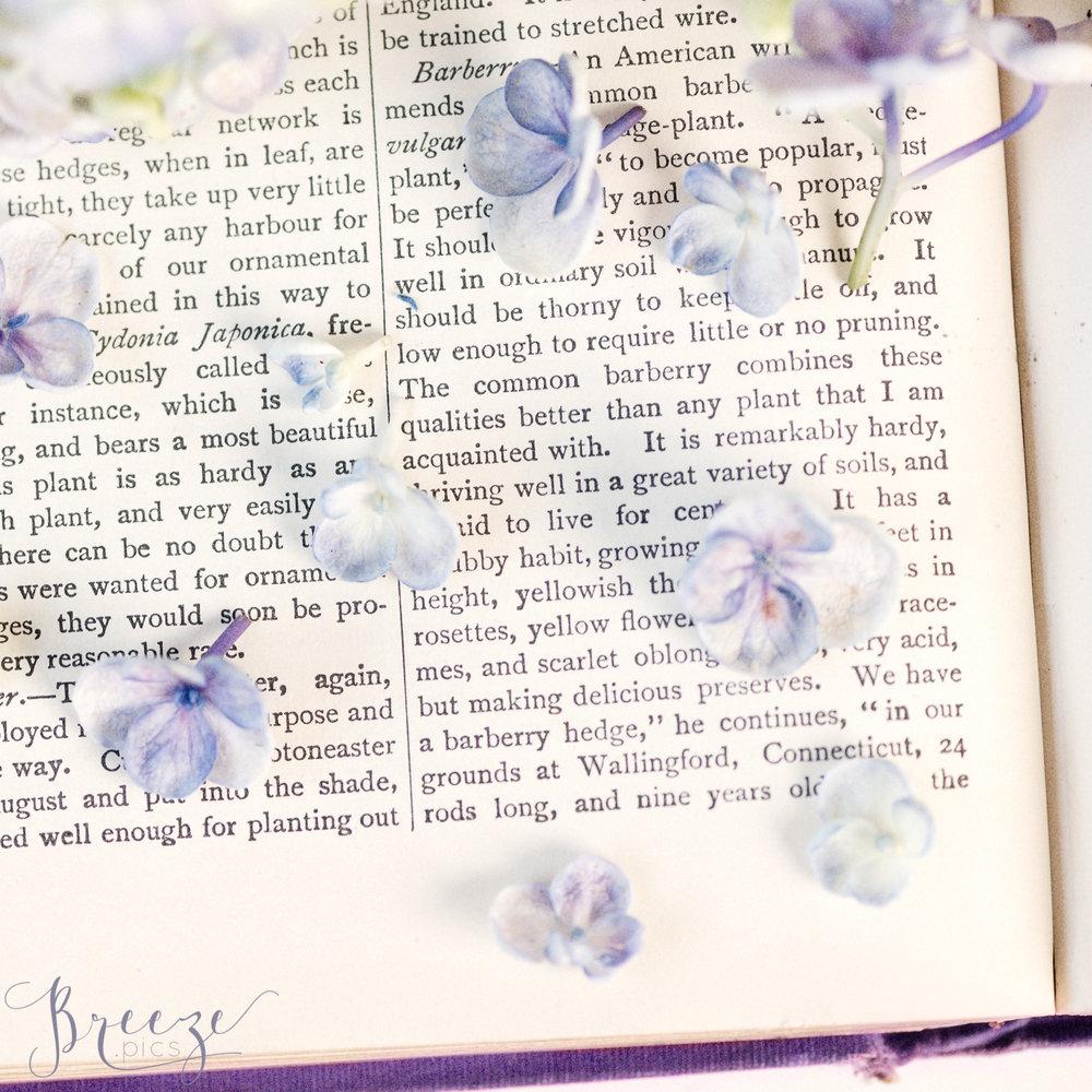 Scattered_hydrangea_petals.jpg