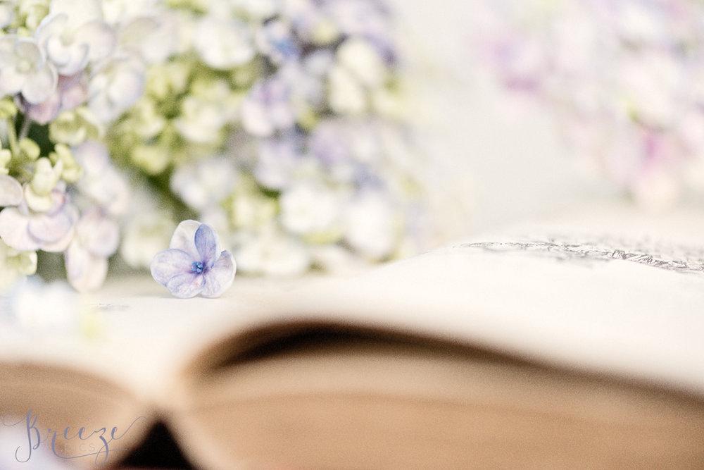 Blue_petal.jpg