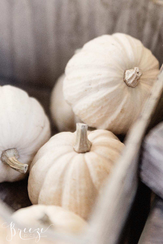 White_pumpkins.jpg