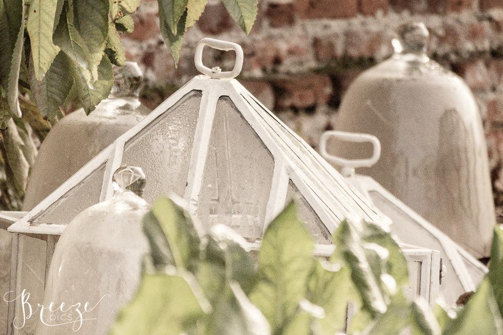 garden_cloche.jpg
