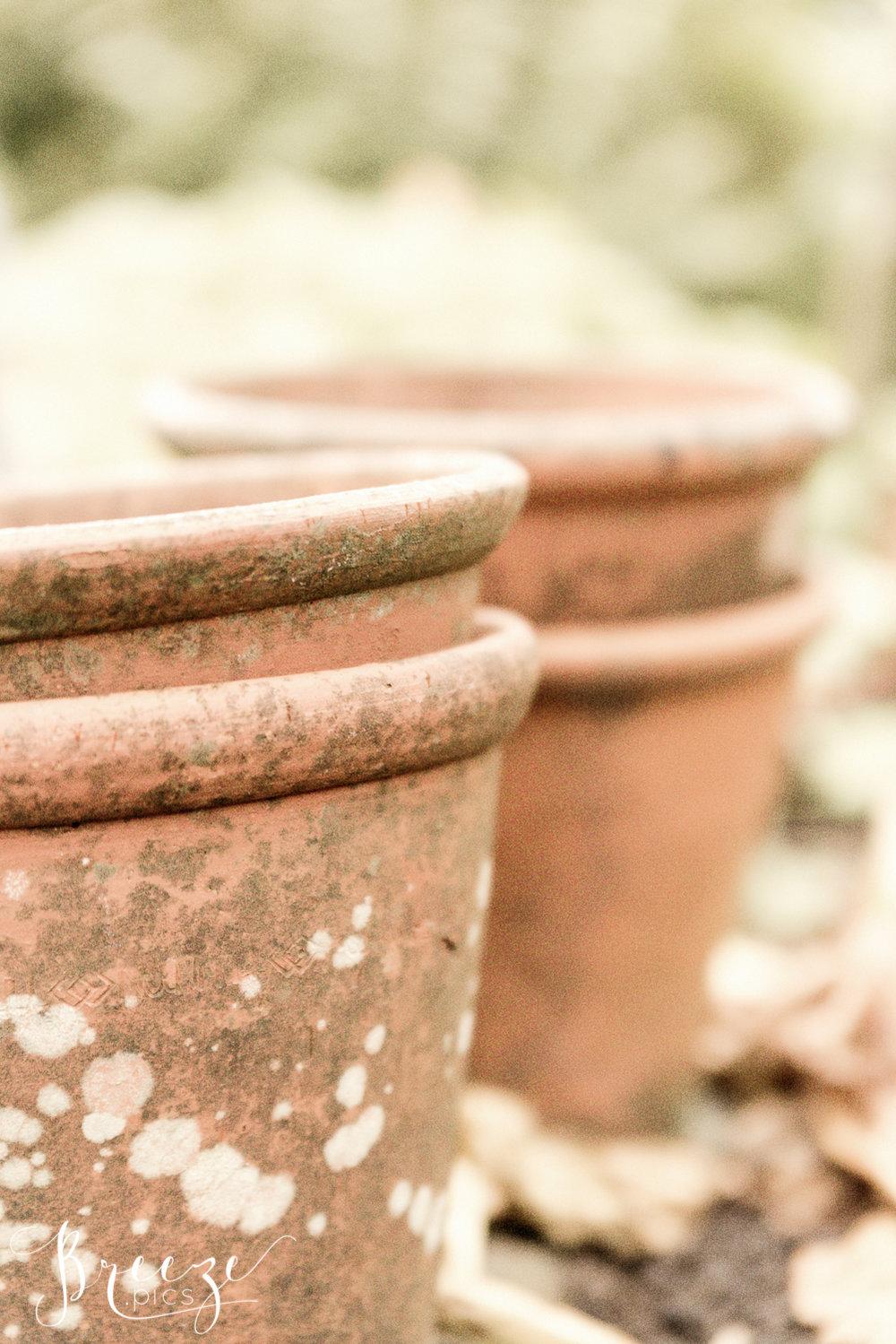 Beatrix_Potter's_plant_pots.jpg