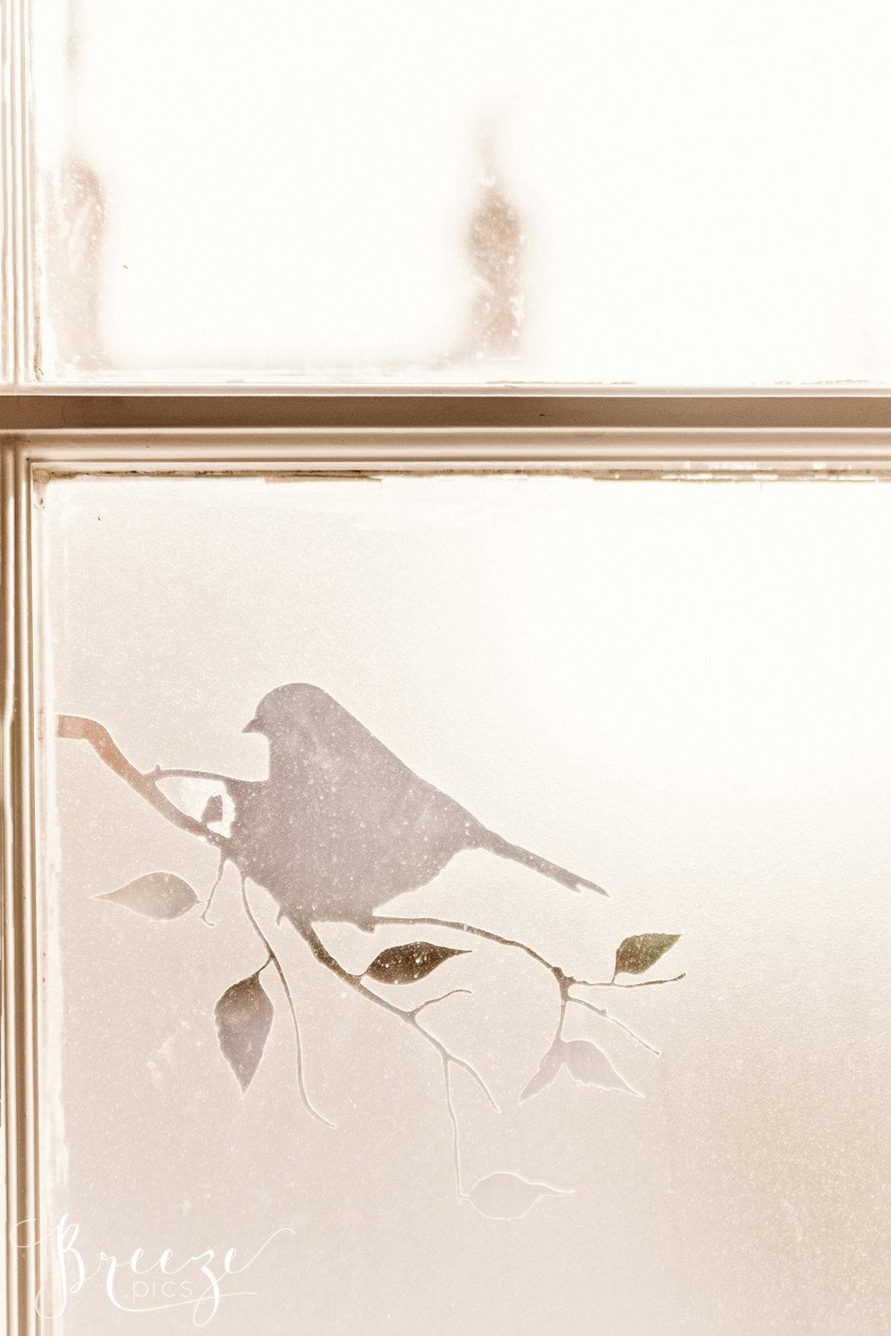 Robin_Window.jpg