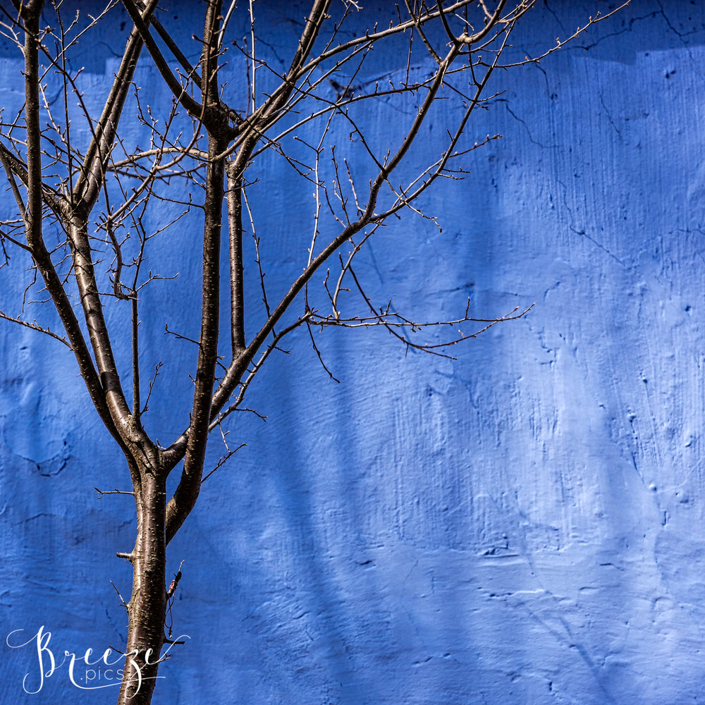 Sibiu_Cobalt_Wall_Tree-2.jpg