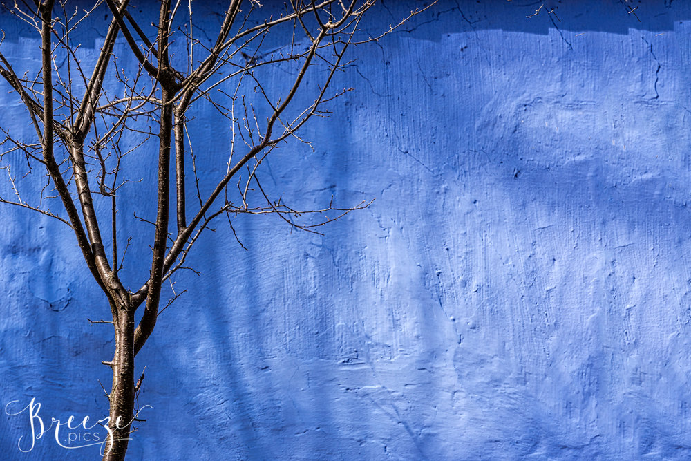 Sibiu_Cobalt_Wall_Tree.jpg