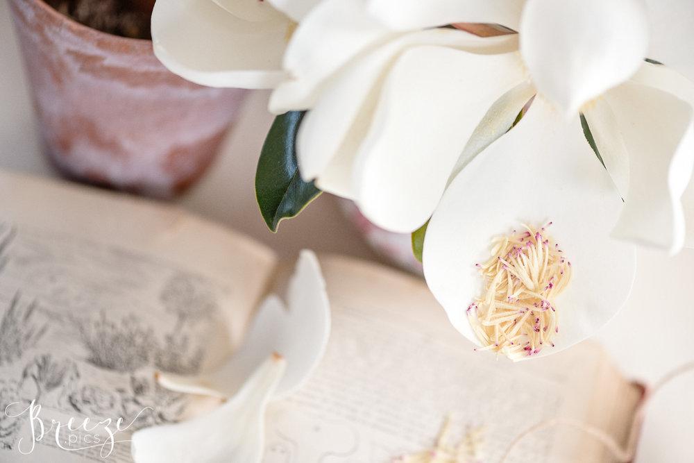 Magnolia_garden_book_still_life_1.jpg