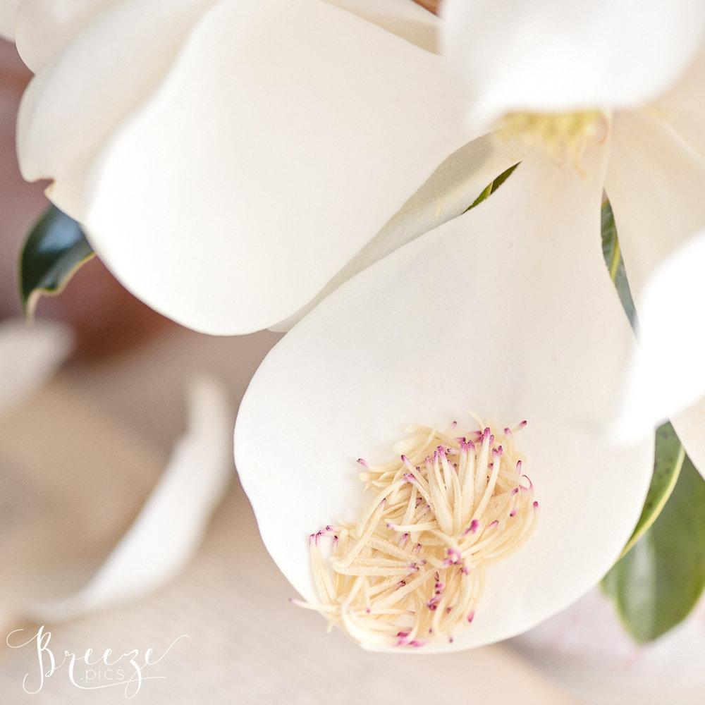 Magnolia_garden_book_still_life_2.jpg
