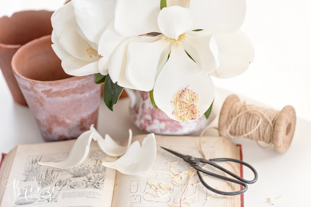 Magnolia_garden_book_still_life_3.jpg