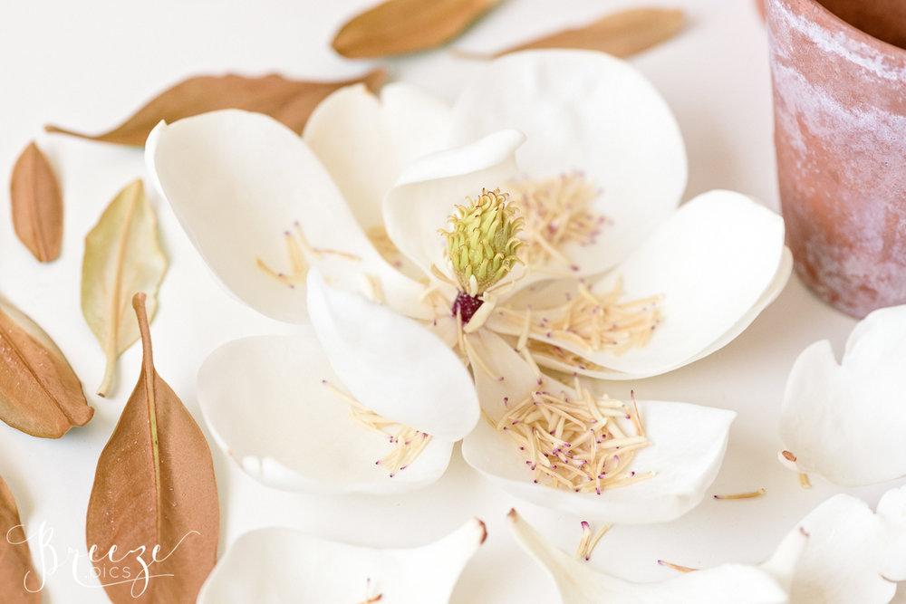 Magnolia_still_life_study_1.jpg
