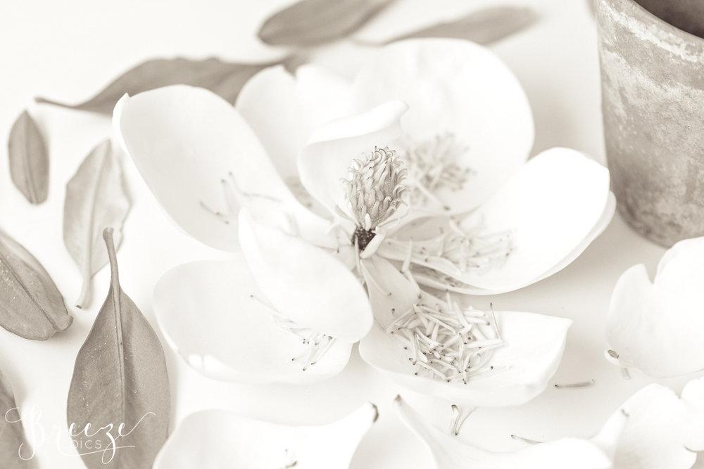 Magnolia_still_life_study_1-Ed.jpg