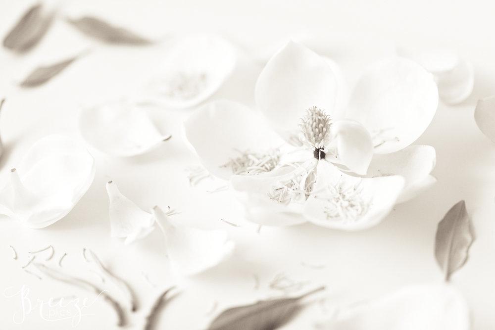 Magnolia_still_life_study_3-Ed.jpg