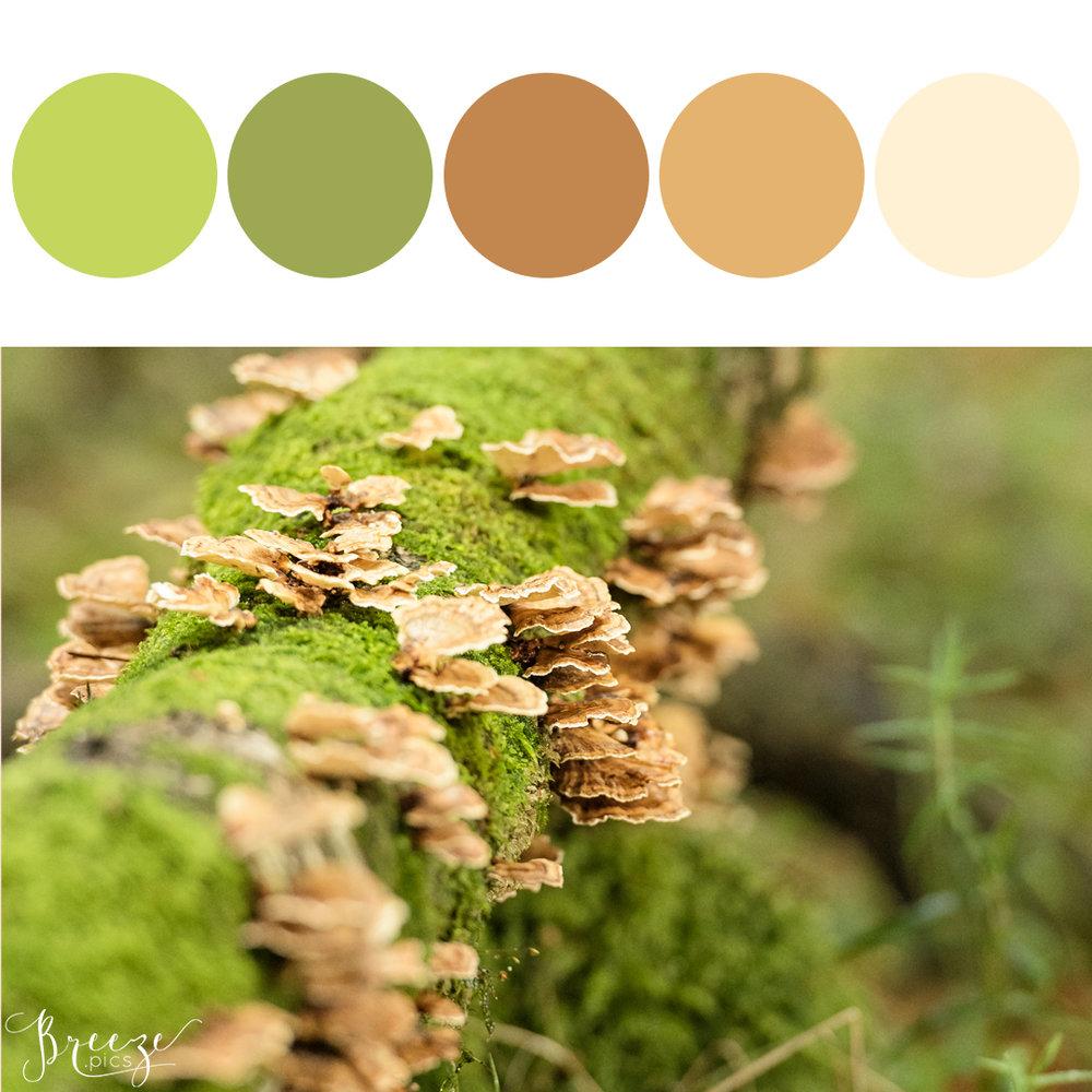 WoodlandFungiMoodboard.jpg