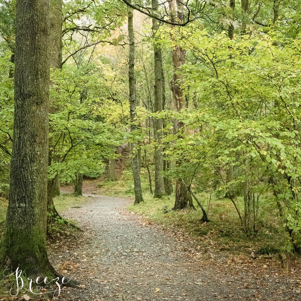 Woodland_Walk.jpg