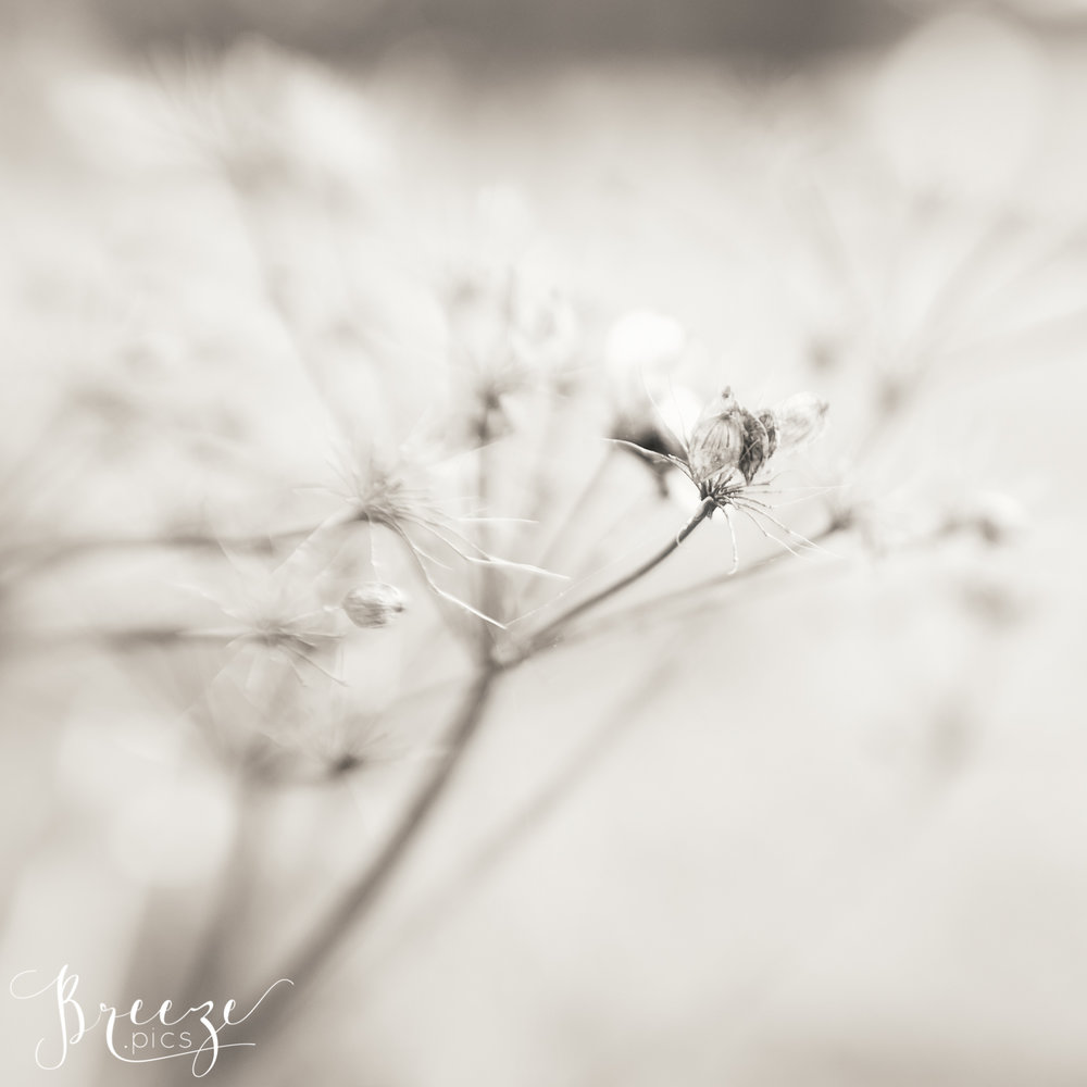 Wispy_Seeds_3.jpg