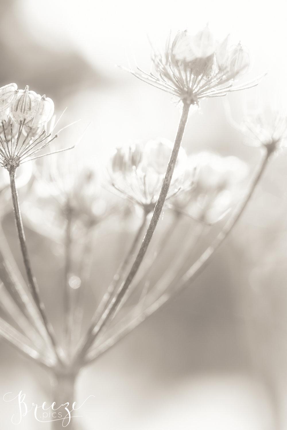 Whispy_Seeds_10.jpg