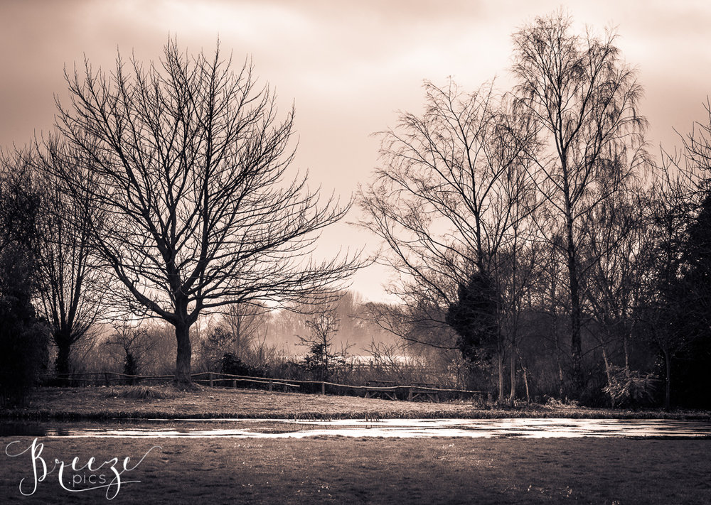 winter30.jpg