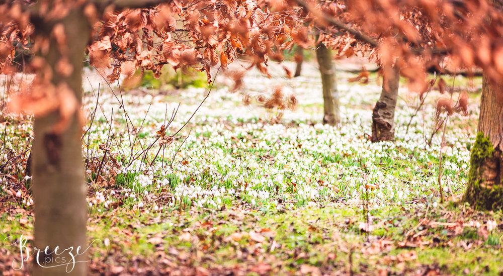 Spring_Bulbs_Bernadette_Meyers-.jpg