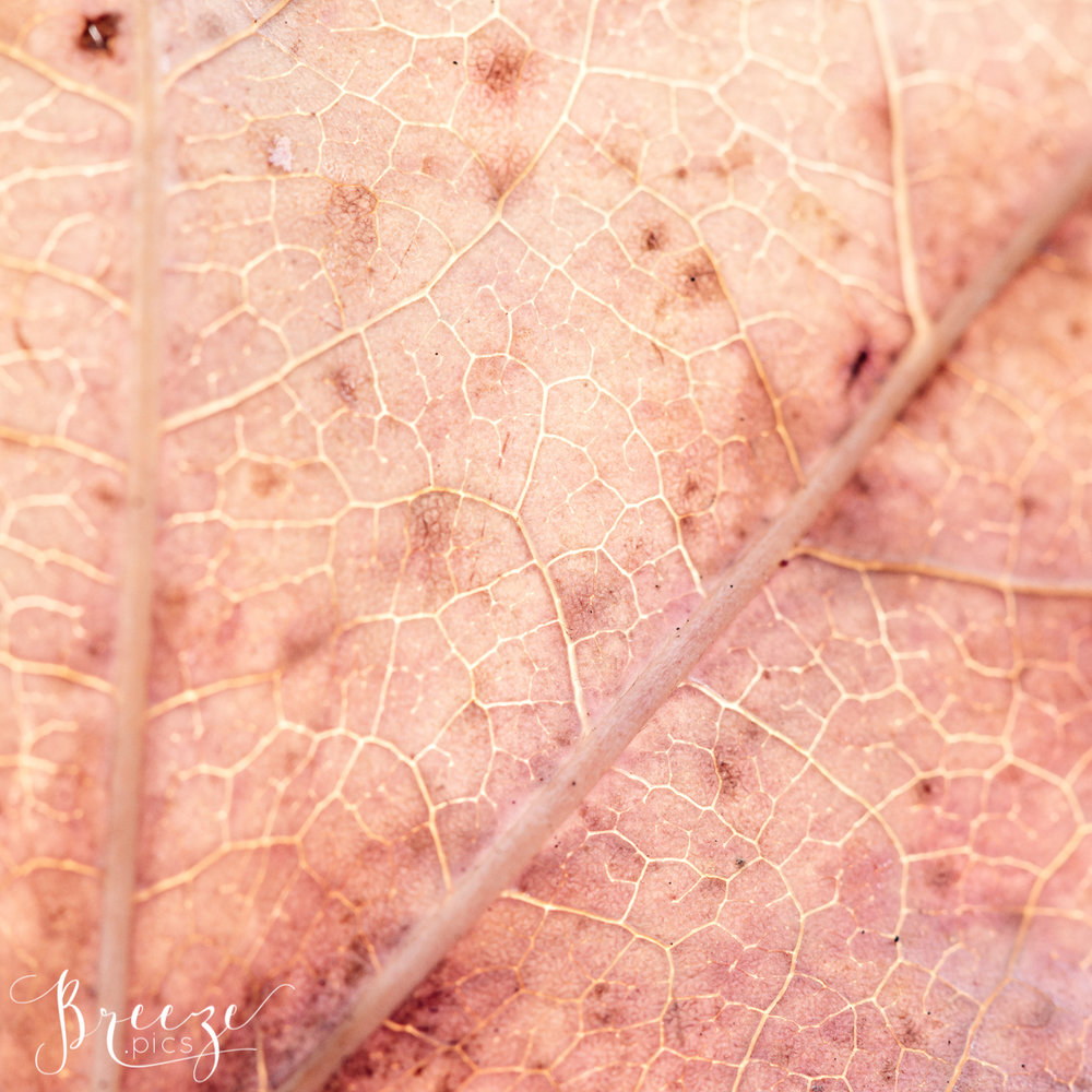 Leaf Macro Detail, Fine Art Limited Edition Photograph, Breeze Pics