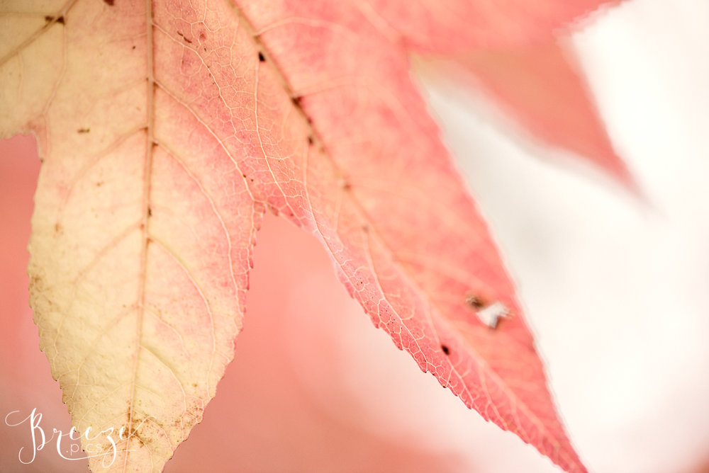 Autumn Leaf Macro Detail, Wall Decor Print, Breeze Pics