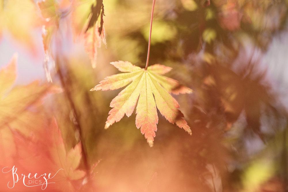 Sunlit Autumn Leaves, Nature Photograph, Limited Edition Wall Print, Bernadette Meyers
